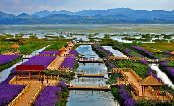 威宁草海——野生动植物的天堂