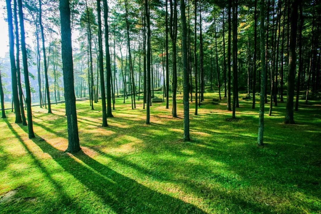 贵阳长坡岭森林公园攻略,长坡岭森林公园地址