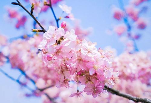 """贵州花海都有哪些花?贵州春天10大精选""""花海圣地"""""""