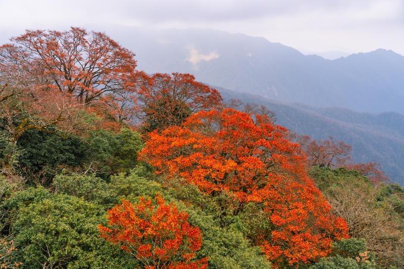 """偶遇""""天空之城""""梵净山,北半球最古老的生态乐园"""